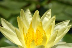 Plant013