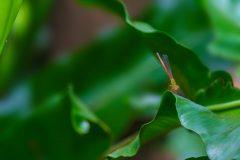 Plant031