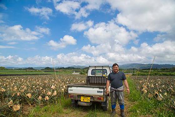 沖縄ヤンバル・パイナップルの里・屋我地島