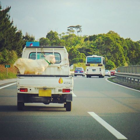 ほのぼのと沖縄風景